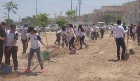 Les élèves de l'école Danielle Mitterrand d'Erbil s'impliquent dans le reboisement du Kurdistan d'Irak - mai 2017