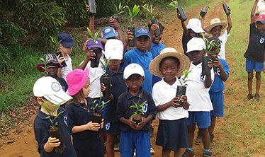 Journée de l'arbre, Ecole primaire Perenco de Muanda, décembre 2017